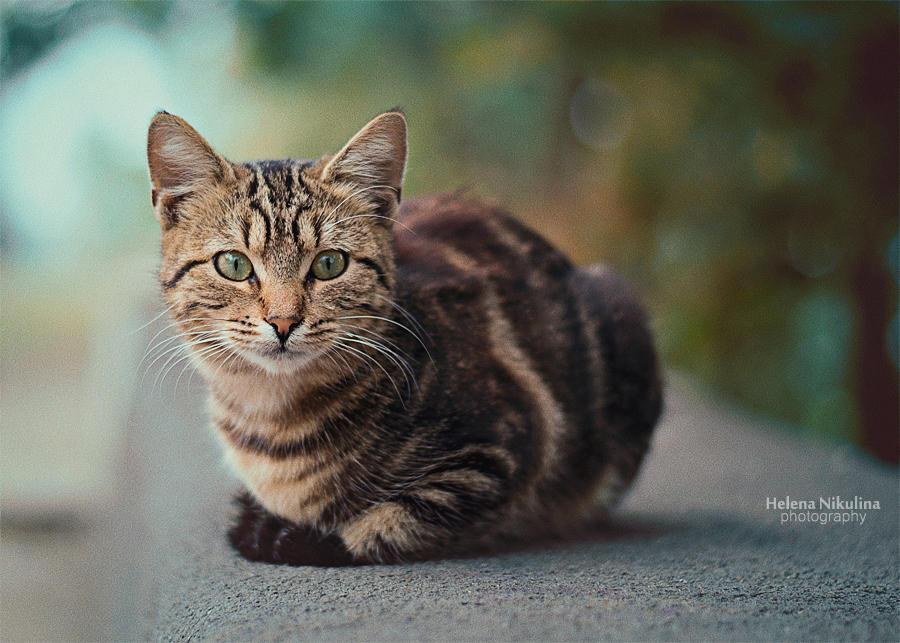 Autumn Cat by Nikulina-Helena