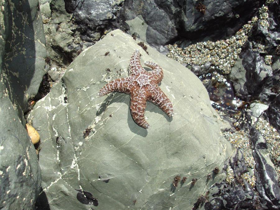 Star fish by Bleachfangirl