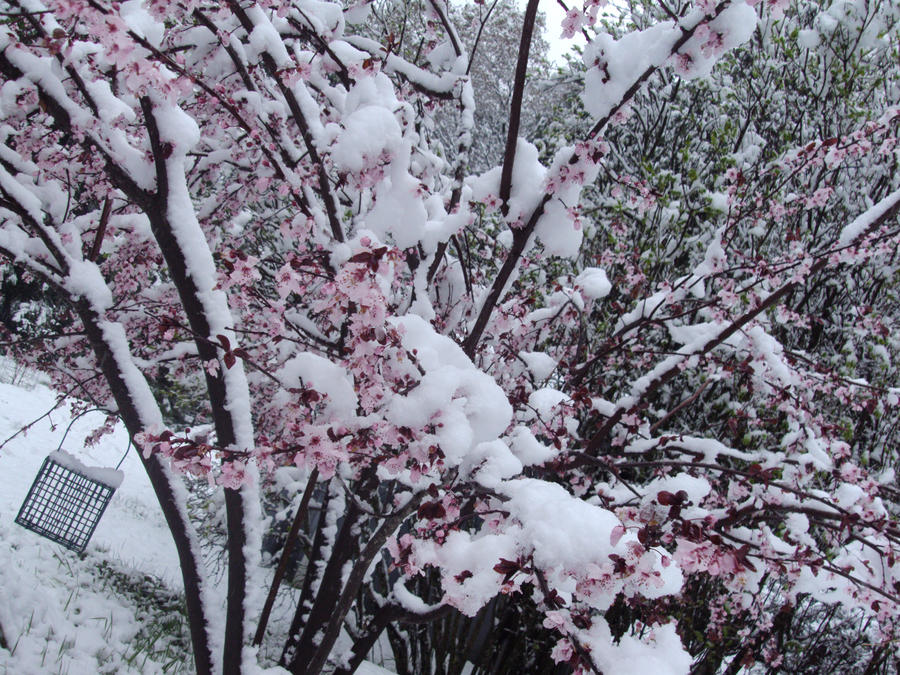 more snow on tree by Bleachfangirl