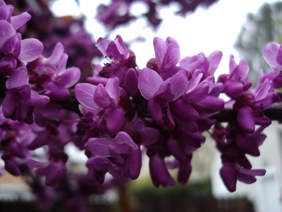 More purple by Bleachfangirl