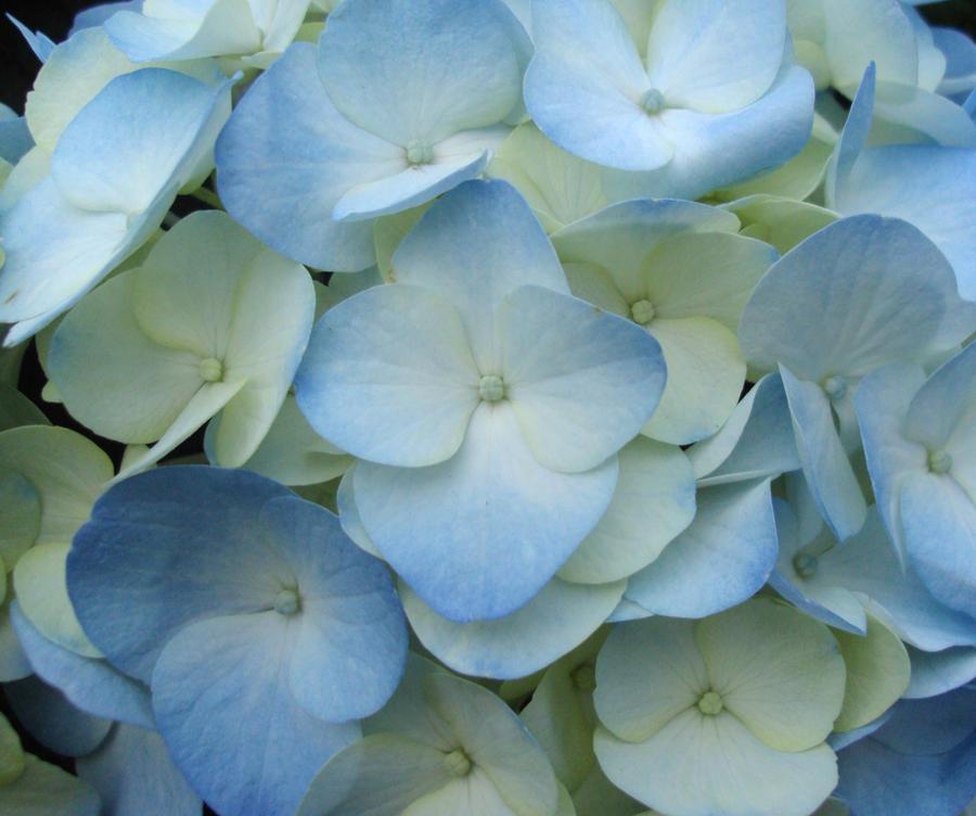 Blue by Bleachfangirl