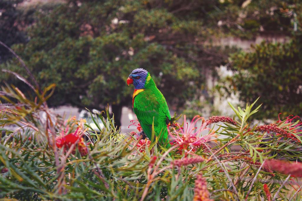 Parrot by llllollll
