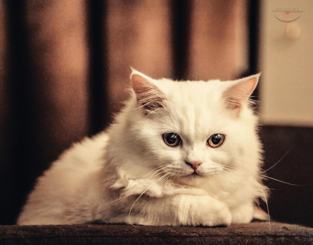 Kitty by llllollll