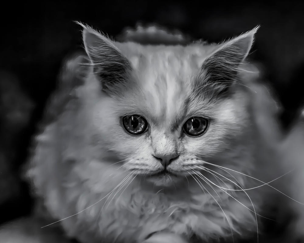 Kitty 2 by llllollll