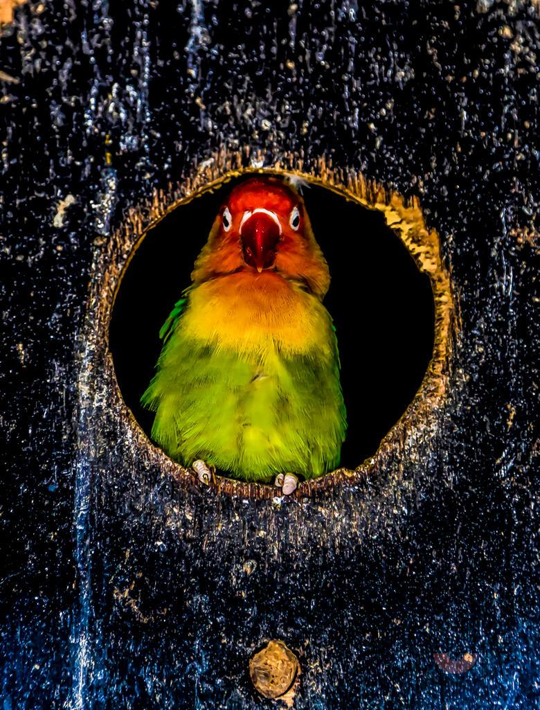 Bird by llllollll