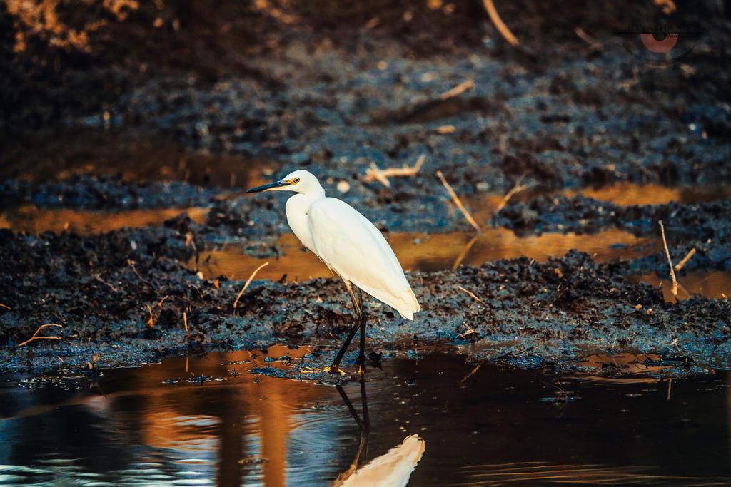 White Crane by llllollll