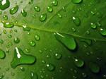 Drops by nizedude