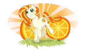 Orange Cutie