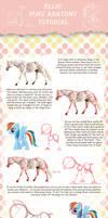 Pony Anatomy Tutorial