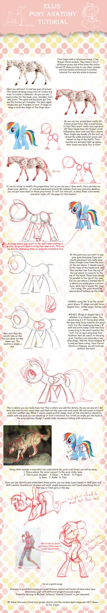 Pony Anatomy Tutorial by EllisArts