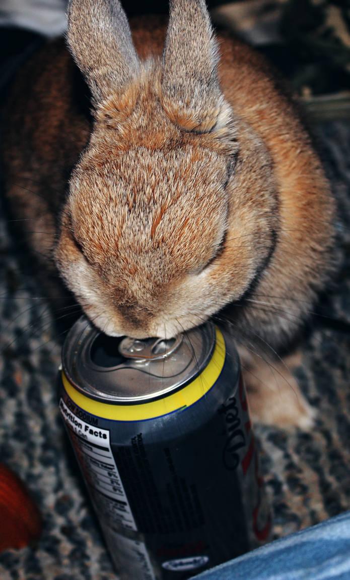 Bunny Diet