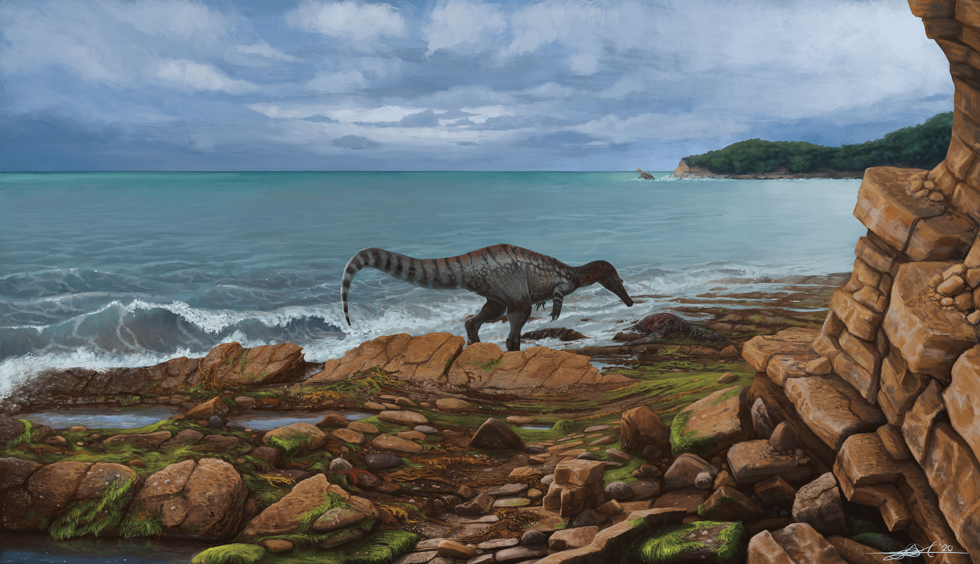 Baryonyx walkeri goes for a stroll