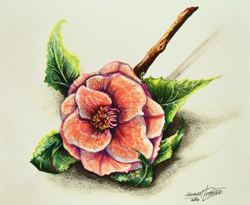 Flower Study by HanBO-Hobbit