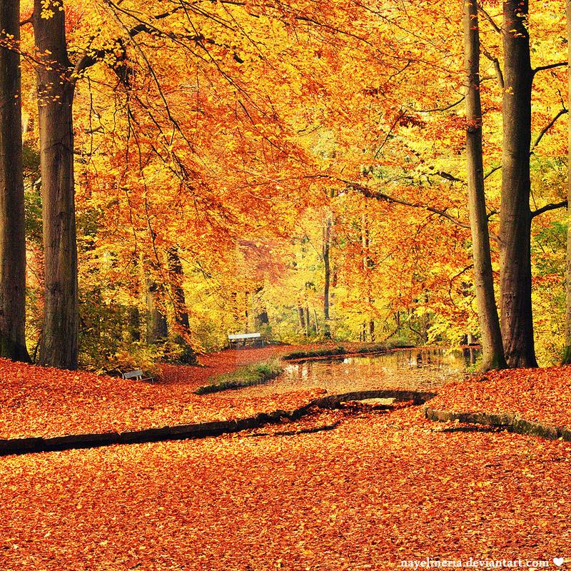 Golden Autumn Days by NayeliNeria