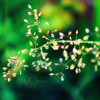 Morning Dew by NayeliNeria