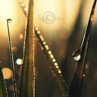 Golden Rain by NayeliNeria