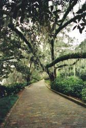 Pathway in Maclay Garden