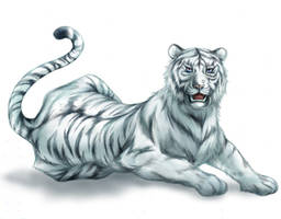 white tiger by sandersonia