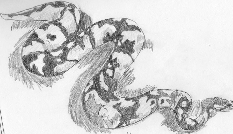 King cobra drawing for kids