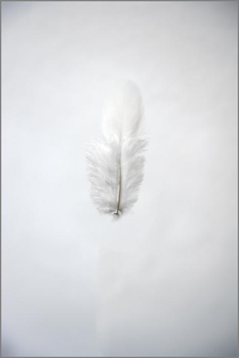 Light White by FrankLoc