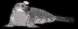 Seal Ewyn