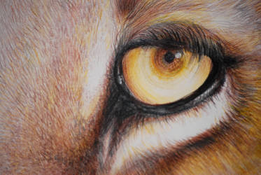 Lionseye by Momof4boyoboys