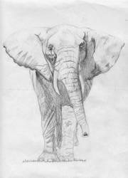 Elephant by Degilwen