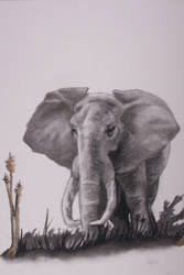 Elephants by Degilwen