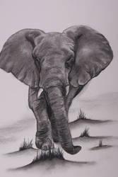 Grey Elephant by Degilwen