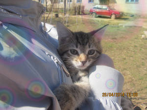 kitten Vasya lived 1 year, born and died March 7.
