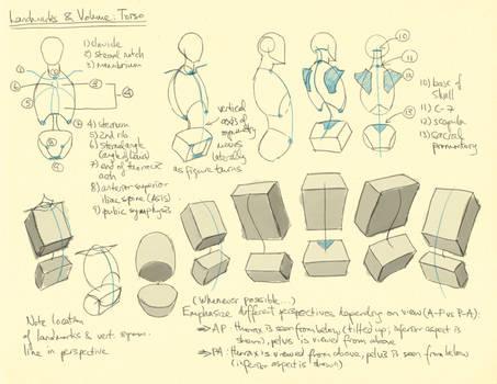 Hampton p.30-36: Torso Landmarks + Volume