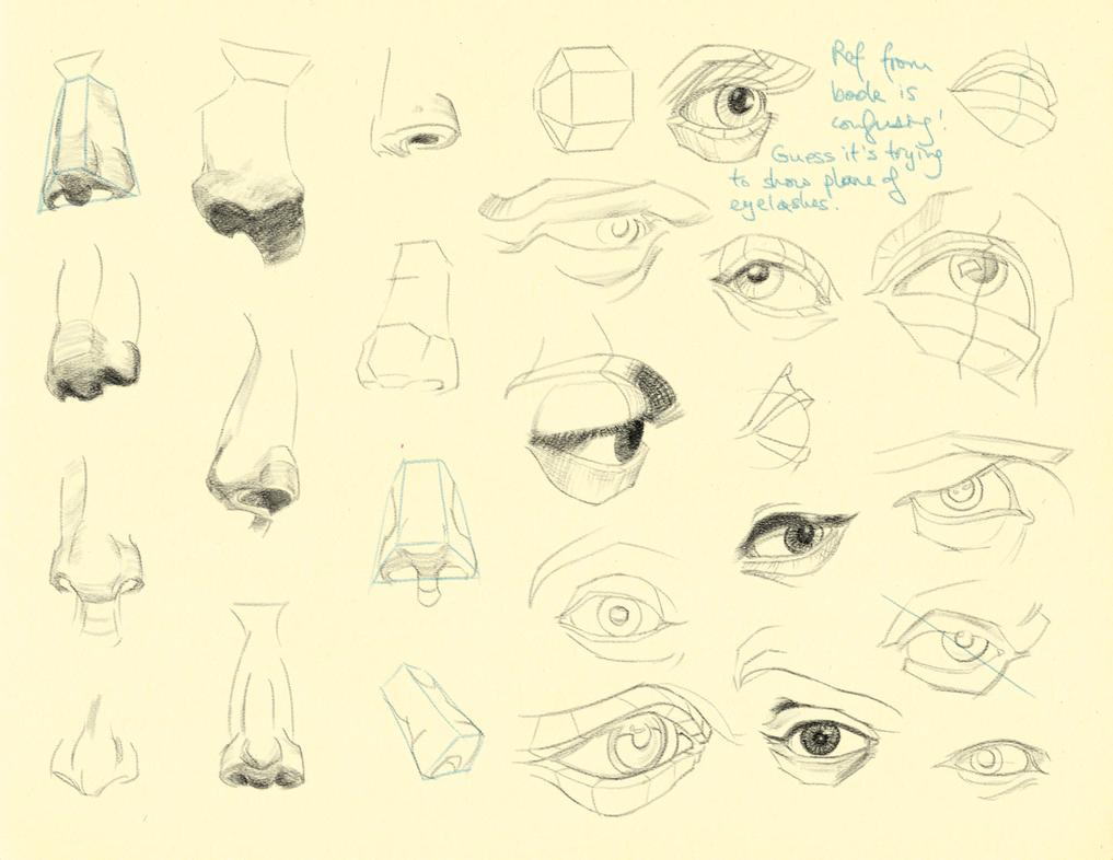 Hampton p.69-71: Nose + Eye Studies by theThirdCartel