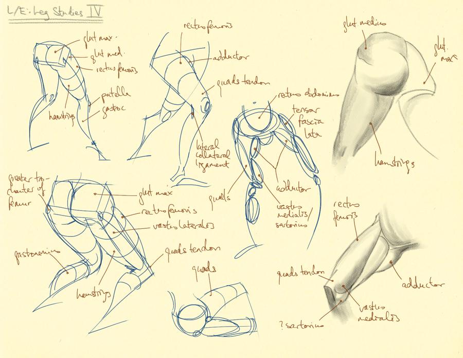 Hampton p.201: L/E - Leg Studies IV by theThirdCartel
