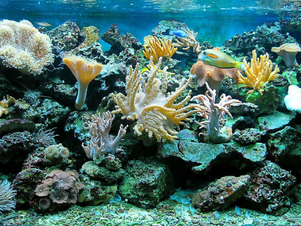 Superior Sea Floor 1 By Mudukrull ...