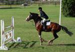horse stock 002