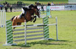 horse stock 005