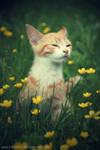 flower kitten II
