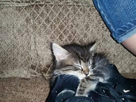 Princess asleep in a shoe