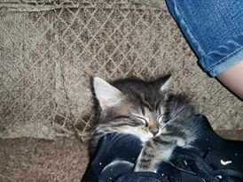Princess asleep in a shoe by pikkupik