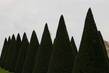 LS trees in versailles by lounalovegood-stock