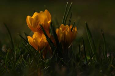 LS garden of march 5 by lounalovegood-stock