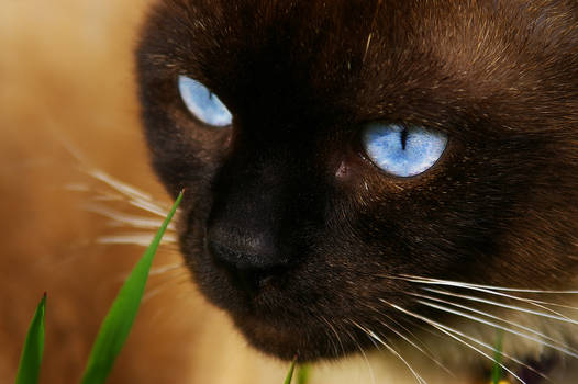 LS cat's eyes