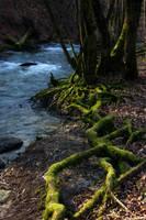 LS forest by lounalovegood-stock
