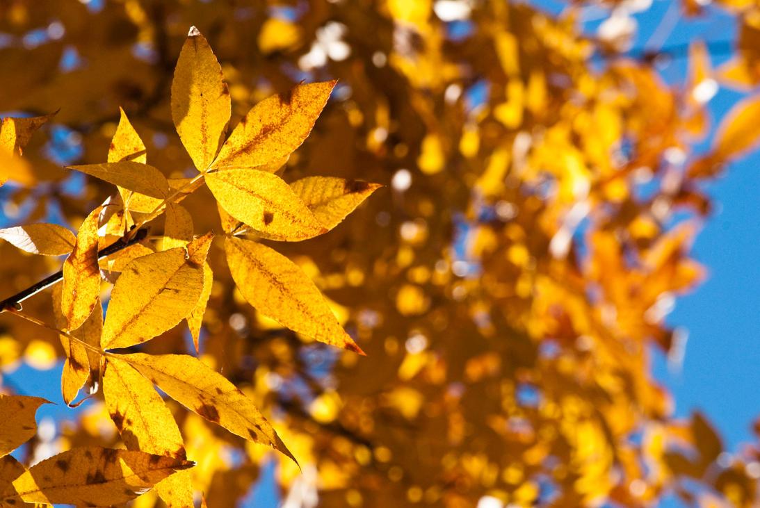 Autumn Gold by d-elner