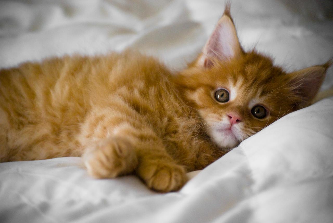 Kitten by d-elner