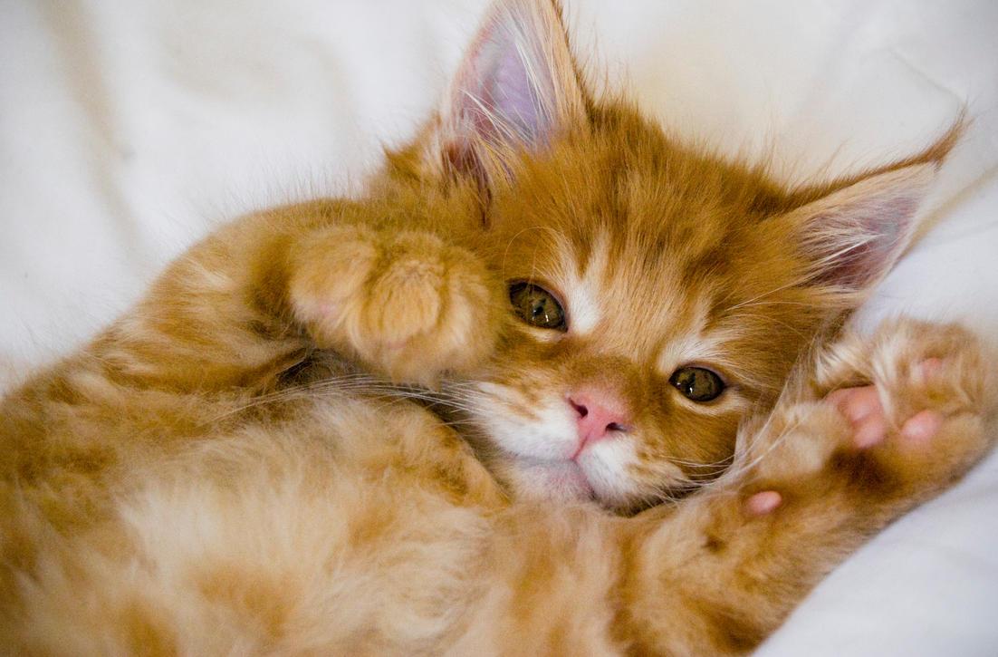 Kitten 2 by d-elner