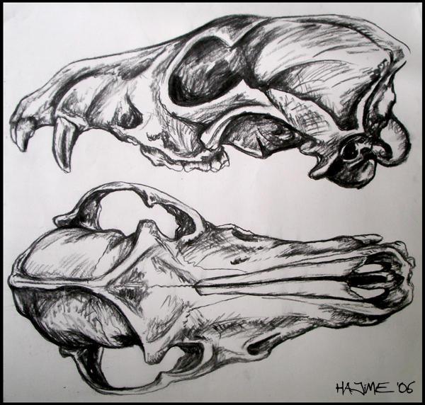 Canine Skull by saiyanhajime