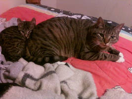 My sisters cats by DomoDC