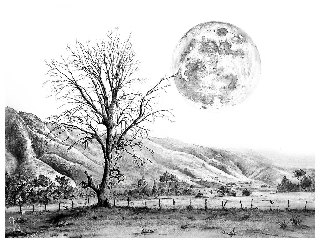 The Tree and the Moon