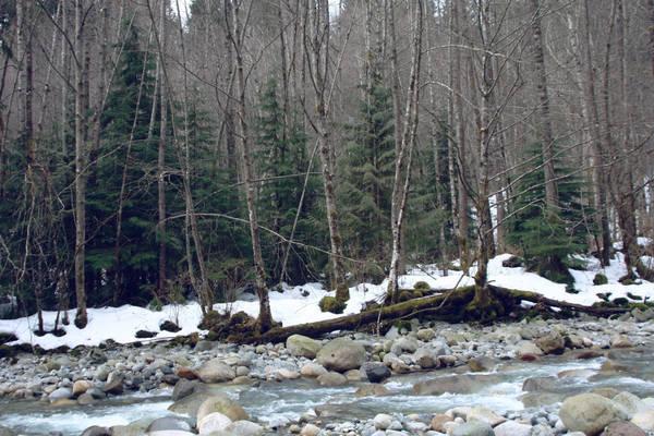 Canadian Creek II